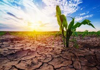 Península de Yucatán libre de riesgo de sequía