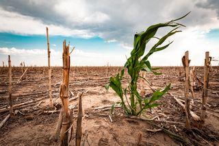 La sequía se agrava en México