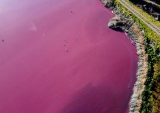 ¿Qué es lo que pintó de rosa esta laguna en la Patagonia argentina?