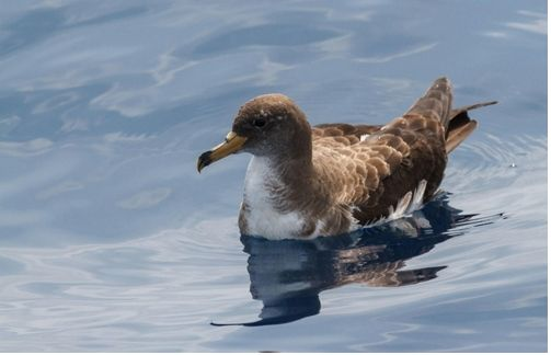 Las Aves, Nuevos Detectores De La Velocidad De Las Corrientes Marinas