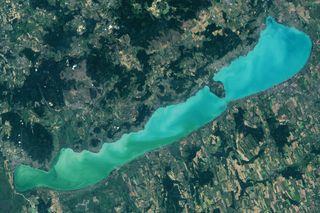 Las azules floraciones en lagos: hallazgos desoladores