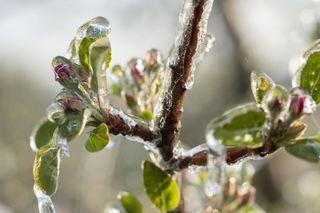Las bruscas transiciones invierno-primavera
