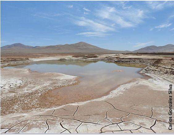 Las Primeras Lluvias En Siglos En El Desierto De Atacama Devastan Su Vida Microbiana