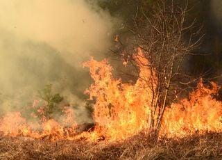 """Les forêts de l'Arctique menacées par des feux """"zombies"""" !"""
