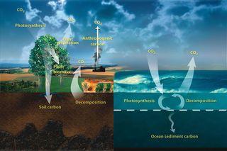 Liberación de carbono del suelo acelerado por las bacterias