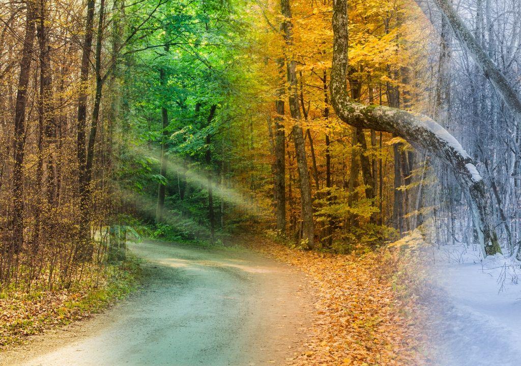 verano, otoño, invierno, primavera