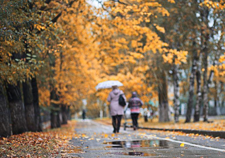 Personas caminando en calle con hojas caídas en día de lluvia