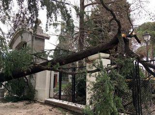 Los árboles y el cambio climático: ¿peligro a la vista?