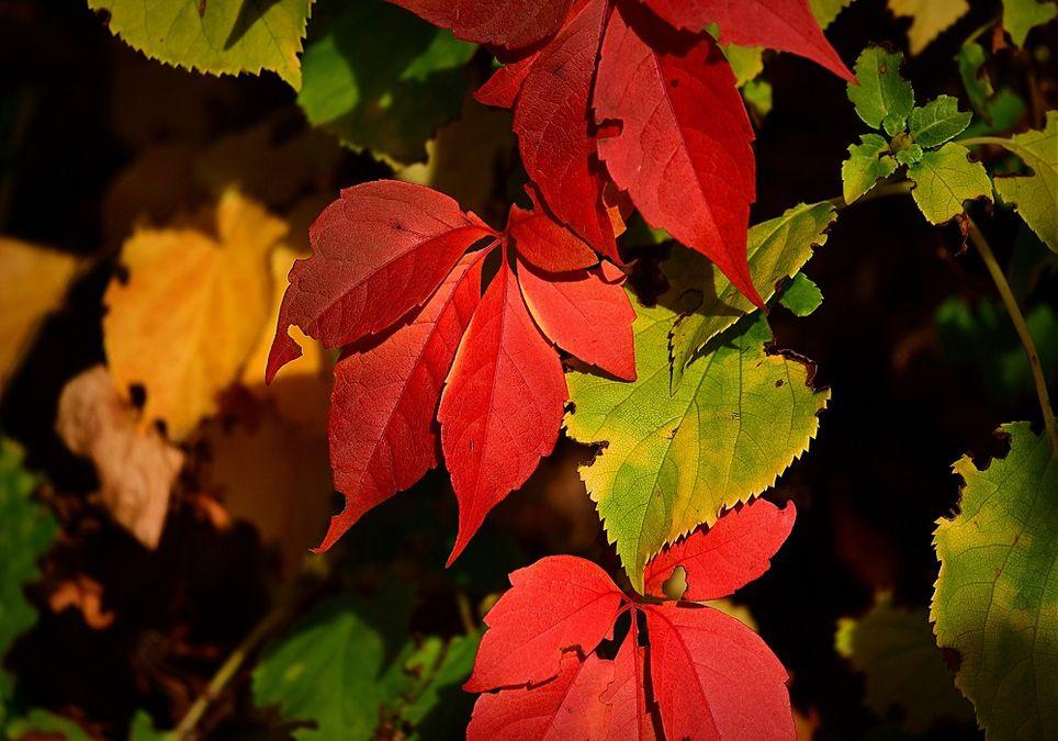 La explosión de colores es característica del otoño.
