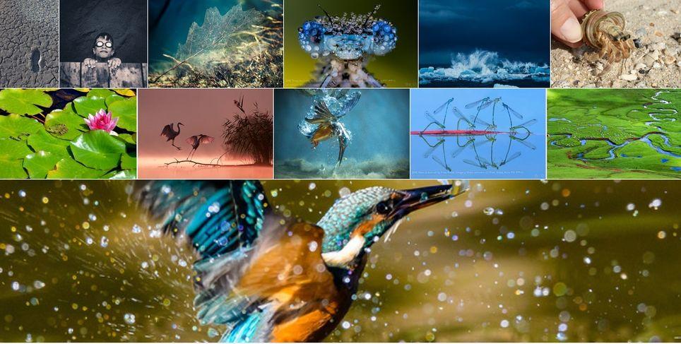 Los Ganadores Del Concurso Fotográfico Waterpix