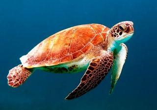 Los océanos, nuestro futuro: la amenaza de los residuos del covid-19