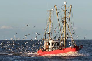 Impactos de La Niña en los recursos pesqueros