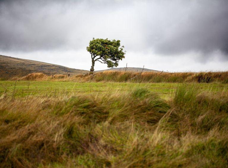 Día ventoso en el campo