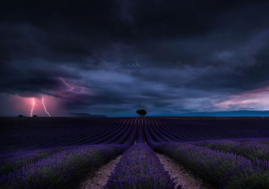 Lavender and lightning
