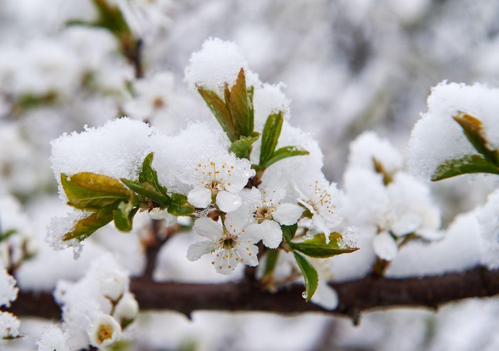 Frostschäden