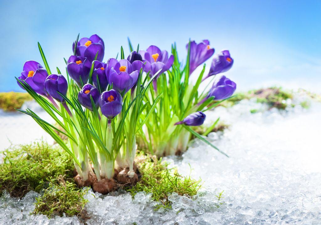 Frühling oder Märzwinter