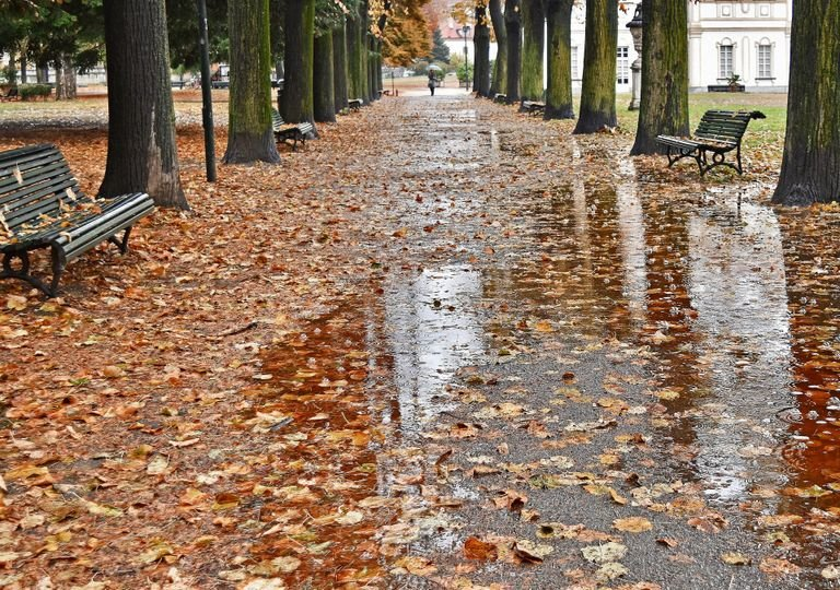 Autunno nel parco della tesoriera di Torino