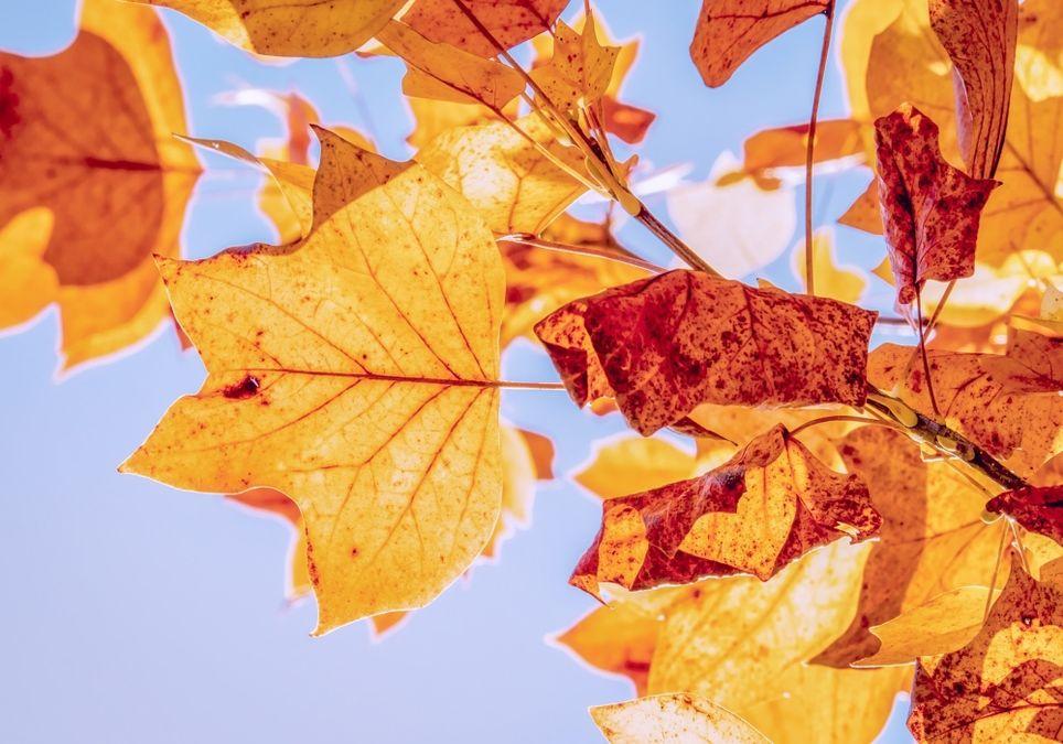 Goldener Herbst auch im November