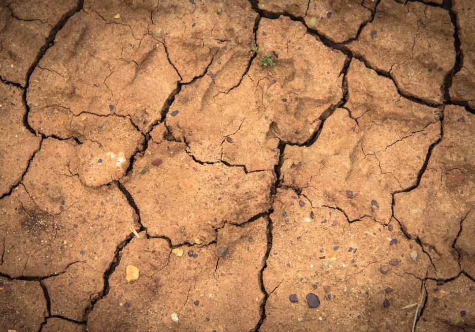 Dürre ohne Ende