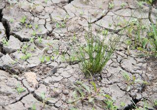 Mega-Hitze oder ein neues Dürre-Hoch: Wie startet der Monat Mai?