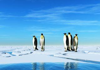 ¡Menos nieve, más lluvia! Futuro escenario climático para la Antártida