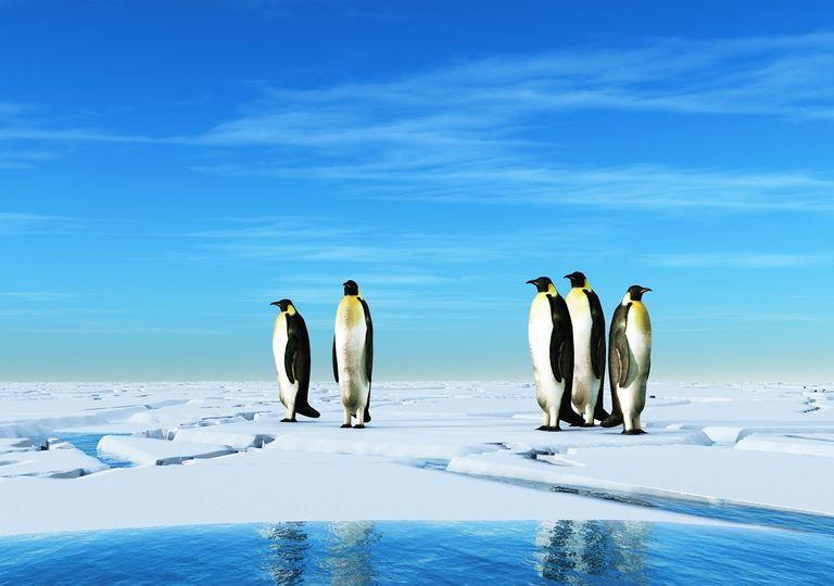 Pingüinos en la Antártica