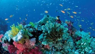 Menos oxigeno en los mares, menos biodiversidad