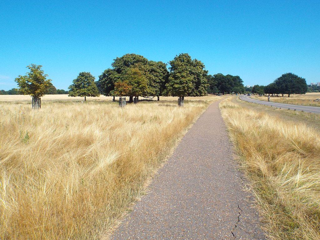 Richmond Park, London.