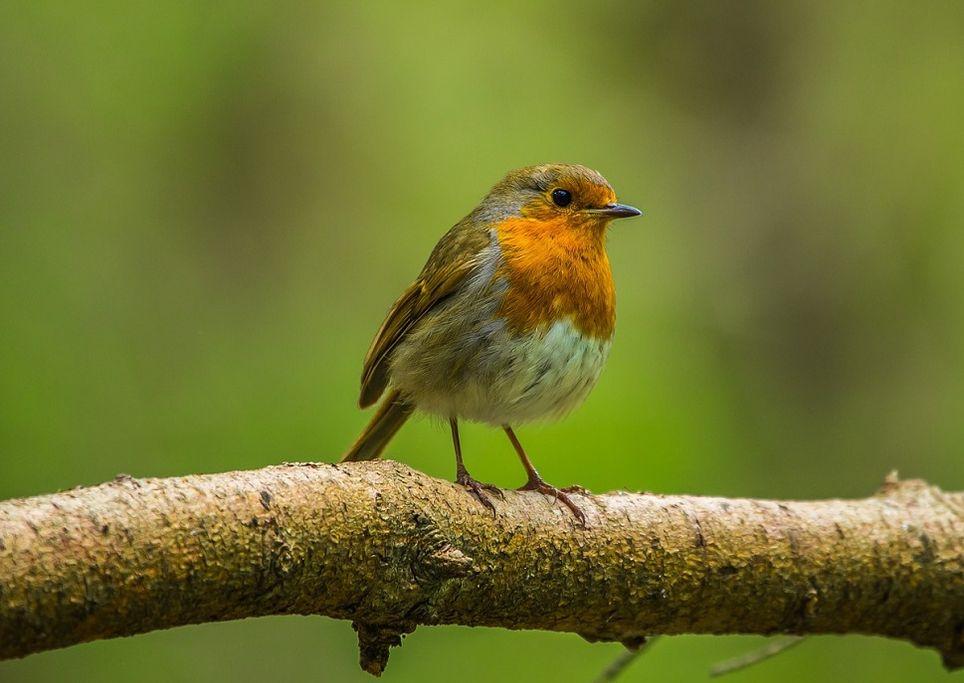 uccello-febbraio-risveglio-primavera