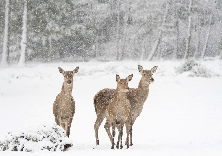 inverno-neve