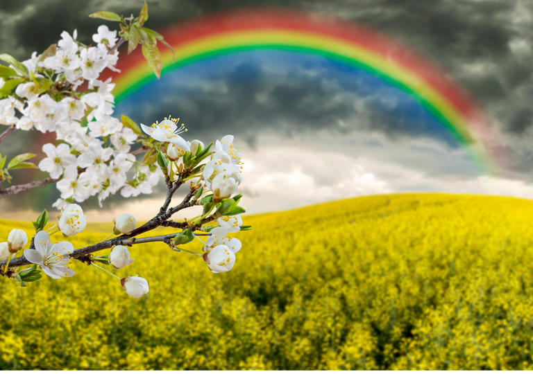 Campagna in fiore fino a venerdì, Pasqua con l'ombrello