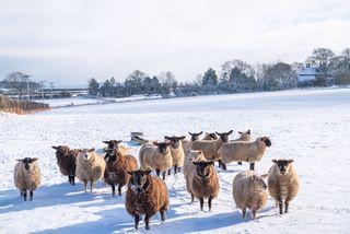 Météo : de la neige à basse altitude au sud ce jeudi !
