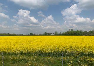 Meteo: domenica 25 di sole, fine aprile perturbato: come sarà maggio?