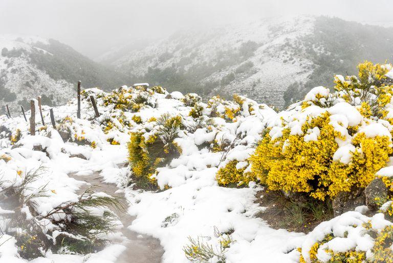 Neige sur Cévennes