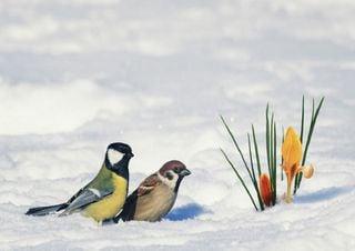 Meteo, freddo e neve tardivi: nevicherà in pianura? Ecco i dettagli