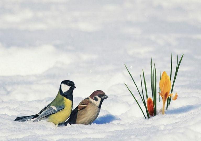 freddo-neve-italia