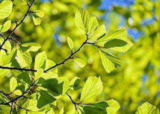 Retour du soleil : le printemps s'installe-t-il pour de bon ?