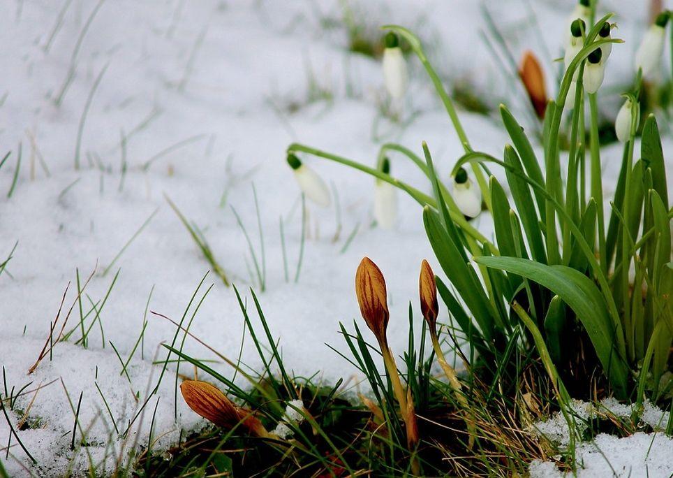 neve-primavera
