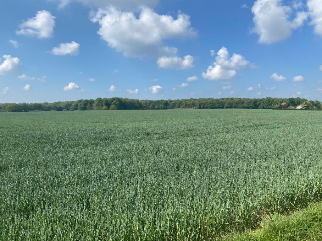 blé sécheresse
