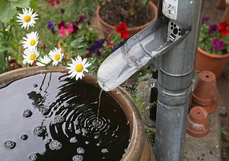 Chuva flores caleira