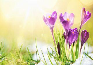 Bis 17 Grad: Extreme Frühlingswärme einen Tag vor Heilgabend!
