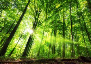 Mini-florestas surgem na Europa como contributo para o clima
