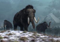 ¡Quieren resucitar al mamut lanudo!