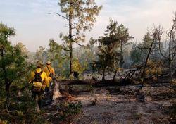 38 incendios forestales activos en México