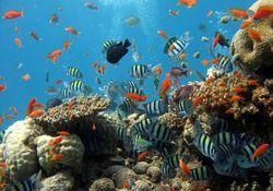 Mudanças climáticas e a crise dos recifes de corais