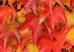 A dança das cores de outono!