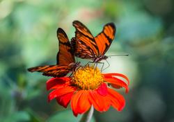 La importancia de las mariposas en la naturaleza