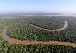 Alterações na floresta tropical