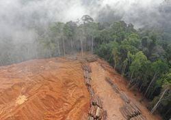 La Amazonia ya no es más el 'pulmón verde' del planeta