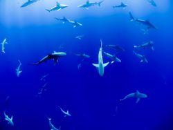 Animais marinhos são os mais vulneráveis ao aquecimento